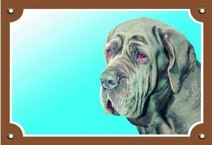 Farebná ceduľka Pozor pes Neapolský mastin