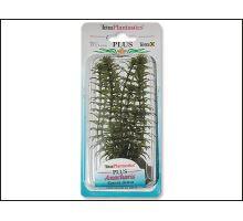 Rastlina Anacharis Plus 15 cm 1ks VÝPREDAJ