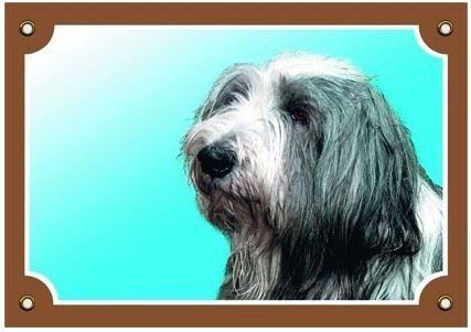 Farebná ceduľka Pozor pes Bearded kólia