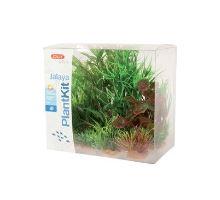Rastliny akvarijné JALAYA 2 sada Zolux