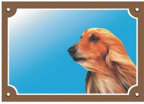 Farebná ceduľka Pozor pes Afganský chrt