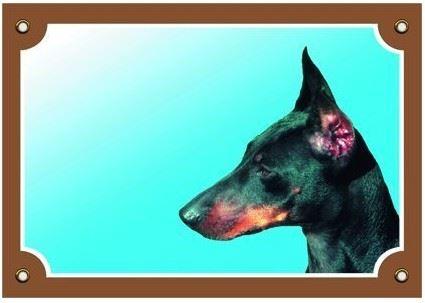 Farebná ceduľka Pozor pes Doberman
