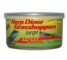 Lucky Reptile Herp Diner sarančata - cca 20 velkých  VÝPREDAJ