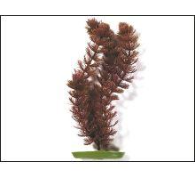 Rastlina Foxtail 20 cm 1ks