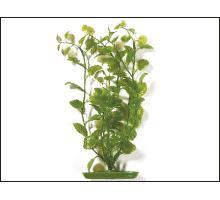 Rastlina Cardamine 30 cm 1ks  VÝPREDAJ