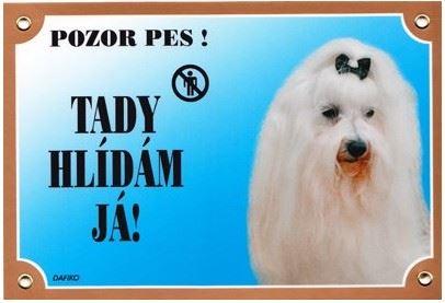 Farebná ceduľka Pozor pes Maltézsky pinč