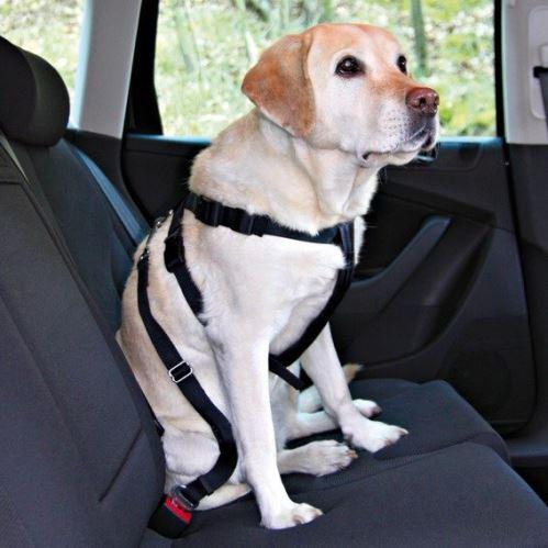 Postroj pes Bezpečnostný do auta
