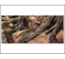 Pozadie AE Root 80 x 40 cm 1ks