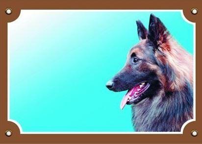 Farebná ceduľka Pozor pes Tervueren