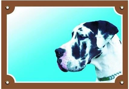 Farebná ceduľka Pozor pes Doga harlequin