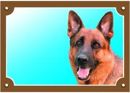 Farebná ceduľka Pozor pes Nemecký ovčiak spredu