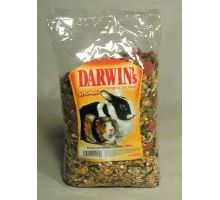 Darwin morča, králik štandard