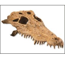 Dekorácie EXO TERRA krokodílej lebka 1ks