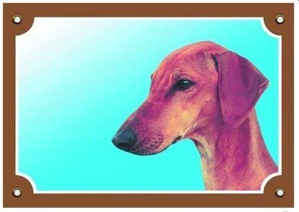 Farebná ceduľka Pozor pes Azavak VÝPREDAJ