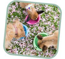 Miska pre psa, cestovné, BecoBowl Travel EKO ružová