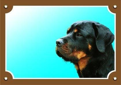 Farebná ceduľka Pozor pes Rottweiler