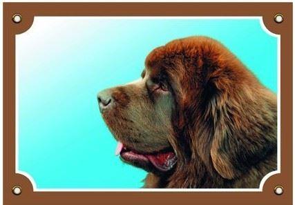 Farebná ceduľka Pozor pes Novofundlanský pes hnedý