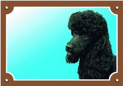 Farebná ceduľka Pozor pes Pudel čierny