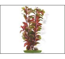 Rastlina Red Ludwigia 38 cm 1ks