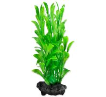 Rastlina TETRA Hygrophila S