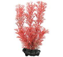 Rastlina TETRA Foxtail Red S