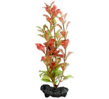 Rastlina TETRA Red Ludwigia S