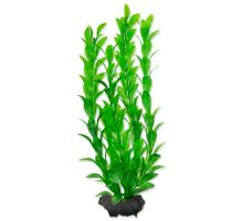 Rastlina TETRA Hygrophila M