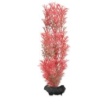 Rastlina TETRA Foxtail Red M