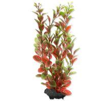 Rastlina TETRA Red Ludwigia M