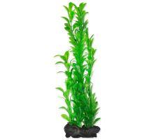 Rastlina TETRA Hygrophila L