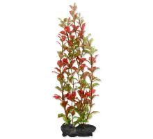 Rastlina TETRA Red Ludwigia L